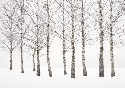 2020 - Winter Birches