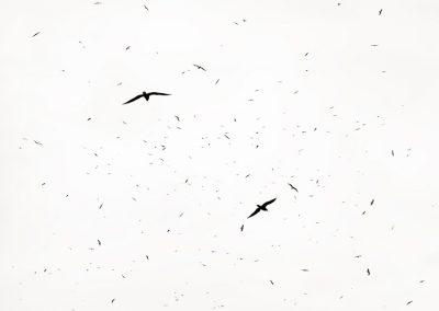 2019 - 240 Birds